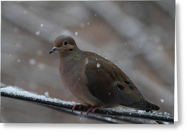 Bird In Snow - Animal - 01138 Greeting Card by DC Photographer