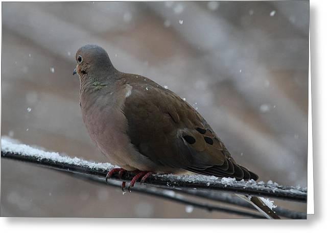 Bird In Snow - Animal - 01139 Greeting Card