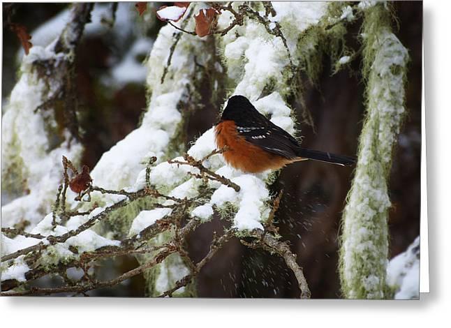 Bird In Snow Greeting Card