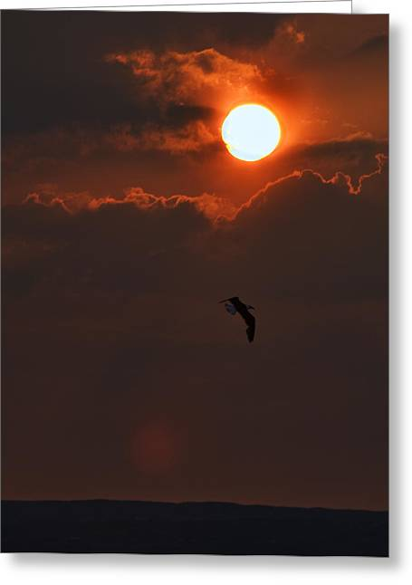 Bird In Sunset Greeting Card by Tony Reddington