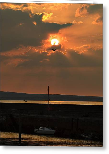 Bird In The Sun Greeting Card by Tony Reddington