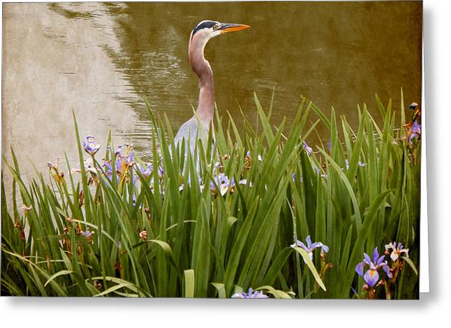 Bird In The Water Greeting Card by Milena Ilieva
