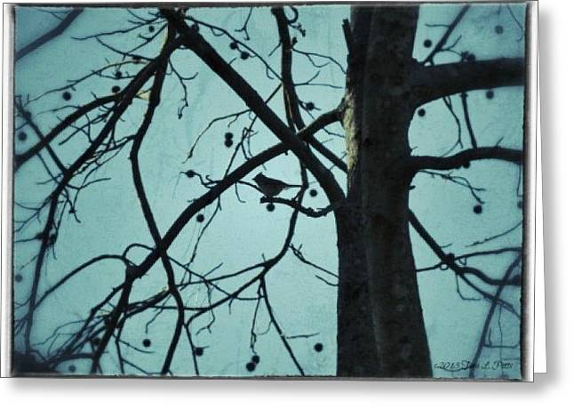Greeting Card featuring the photograph Bird In Tree by Tara Potts
