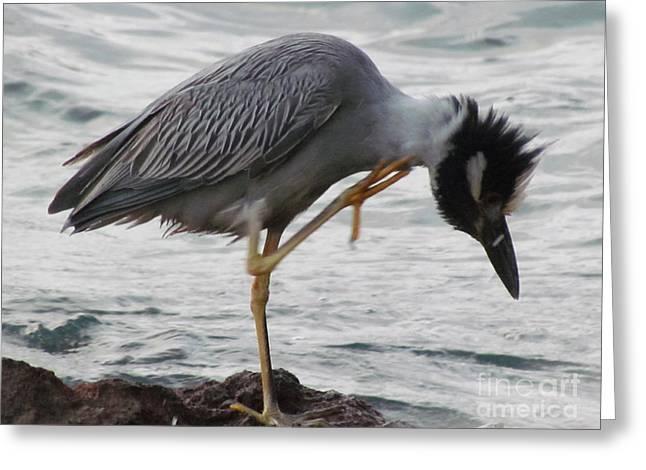 Bird Itch Greeting Card