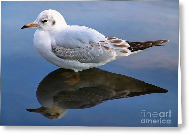Greeting Card featuring the photograph Bird Reflections by John Swartz