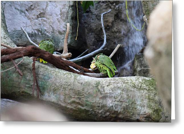 Bird - National Aquarium In Baltimore Md - 12126 Greeting Card by DC Photographer