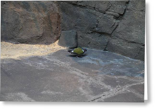 Bird - National Aquarium In Baltimore Md - 12127 Greeting Card by DC Photographer