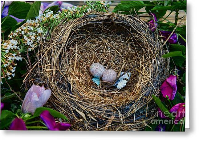 Bird Nest - They Flew The Coop Greeting Card