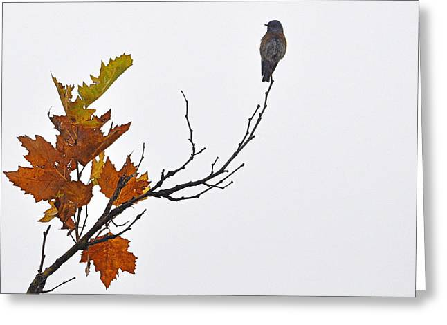 Greeting Card featuring the photograph Bird Of Autumn by AJ  Schibig