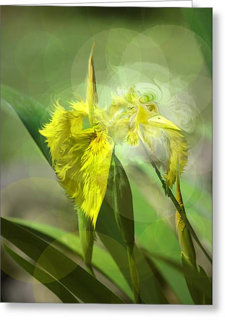 Bird Of Iris Greeting Card by Adria Trail