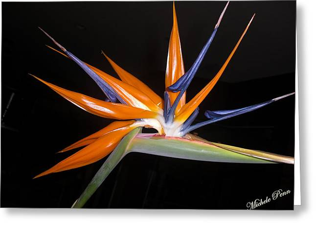 Bird Of Paradise Beauty 4 Greeting Card
