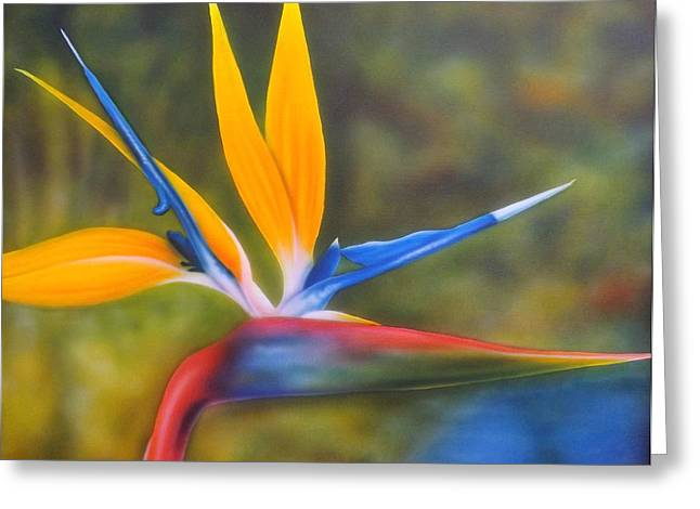 Bird Of Paradise Greeting Card by Darren Robinson