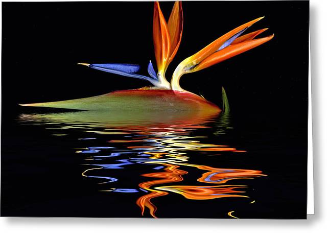 Bird Of Paradise Flood Greeting Card