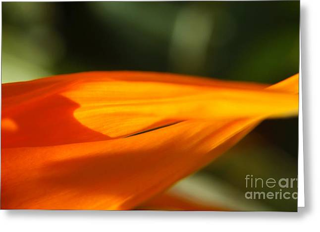 Bird Of Paradise Flower Petals Macro Greeting Card by Anna Lisa Yoder