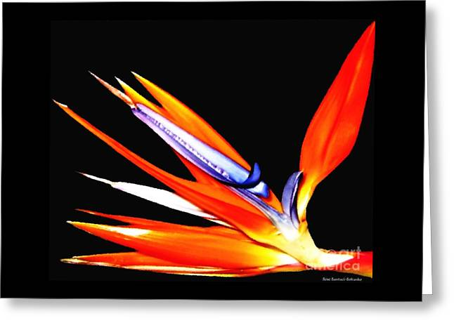 Greeting Card featuring the photograph Bird Of Paradise Flower With Oil Painting Effect by Rose Santuci-Sofranko
