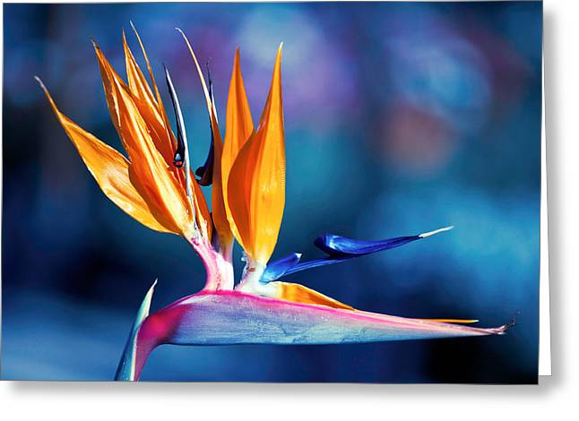 Bird Of Paradise Greeting Card by Gunter Nezhoda