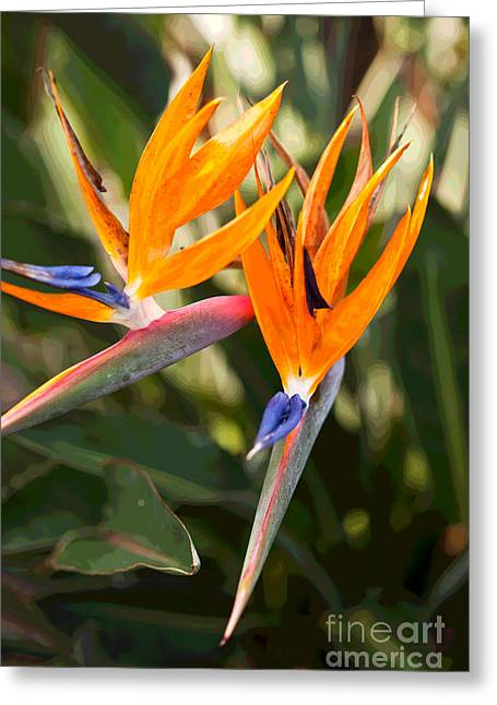 Bird Of Paradise In Flower Greeting Card