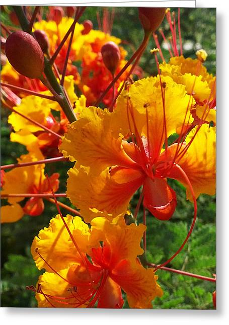 Greeting Card featuring the photograph Bird Of Paradise by Suzanne Silvir