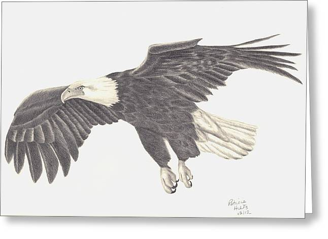 Bird Of Prey Greeting Card by Patricia Hiltz