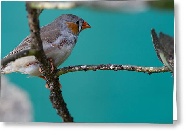 Greeting Card featuring the photograph Bird On A Branch by John Hoey