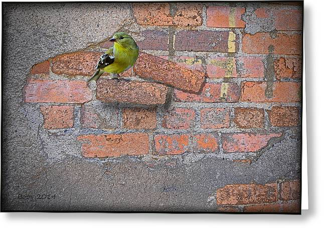 Bird On A Brick Greeting Card by Larry Bishop