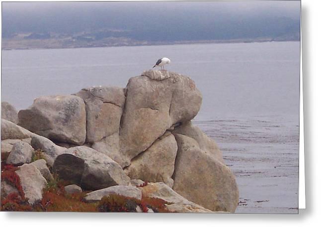Bird On A Rock Greeting Card by Pharris Art