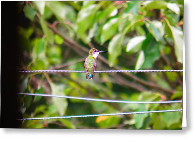 Greeting Card featuring the photograph Bird On A Wire by Nick Kirby
