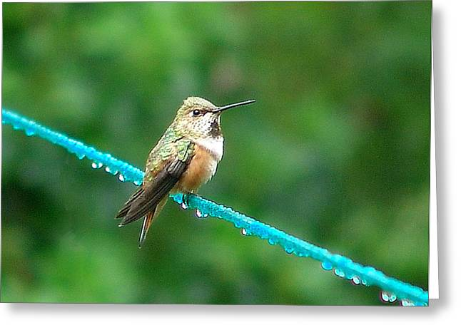 Bird On An Icy Wire Greeting Card