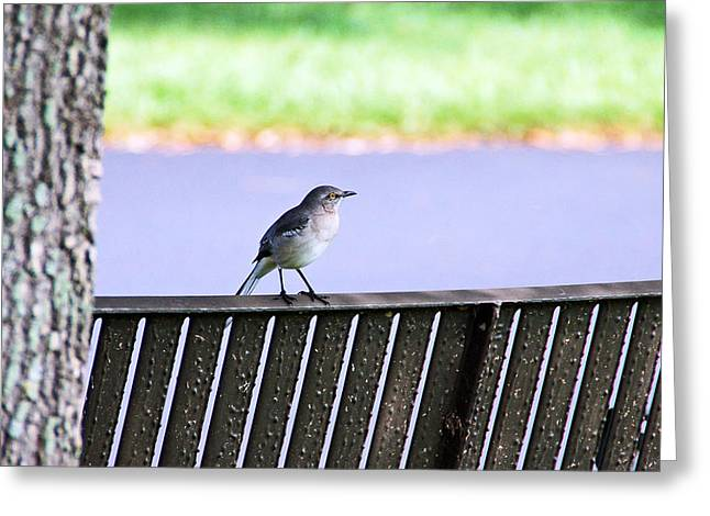 Bird On Bench Greeting Card by Aimee L Maher Photography and Art Visit ALMGallerydotcom