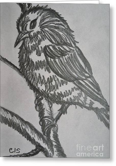 Bird On Branch Greeting Card by Cecilia Stevens