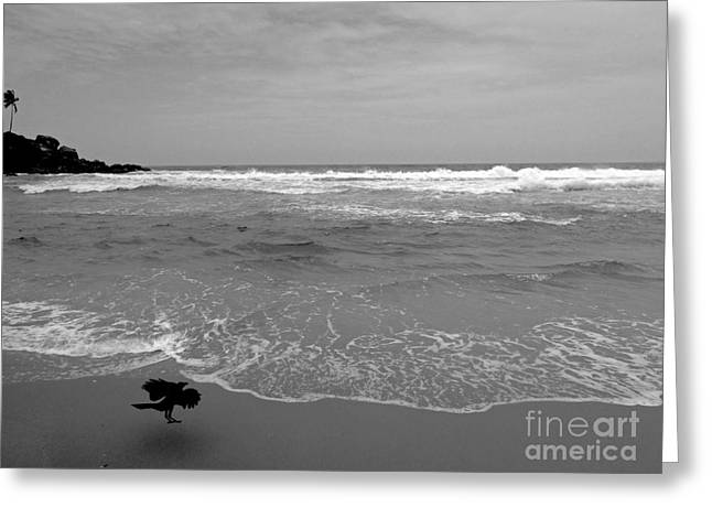 Bird On Kovalam Beach Greeting Card