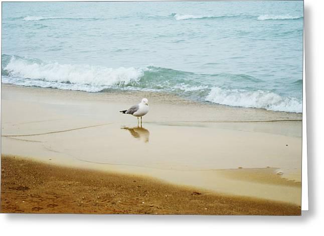 Bird On The Beach Greeting Card by Milena Ilieva