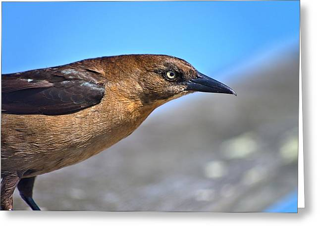 Bird On The Kure Beach Pier Greeting Card