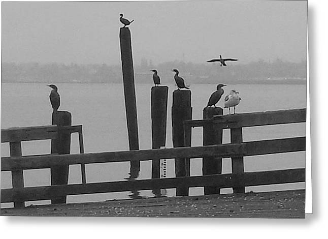 Bird Party In Black And White Greeting Card