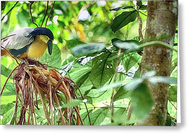 Bird Perching On A Tree, Costa Rica Greeting Card by Panoramic Images