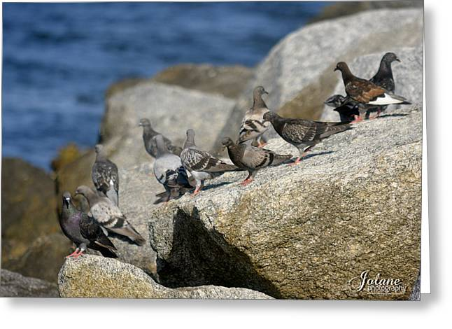 Bird Rock Beach Greeting Card