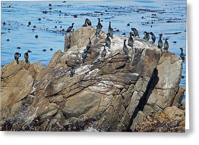 Bird Rock Greeting Card