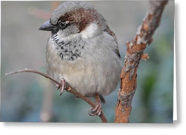Bird Shot Greeting Card