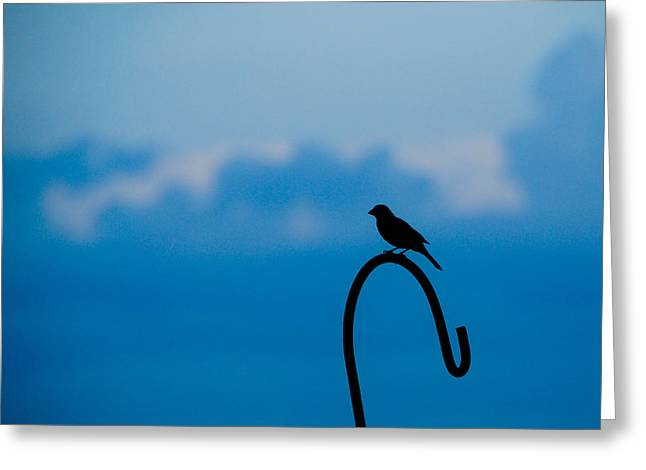 Bird Silhouette  Greeting Card by Dee Dee  Whittle