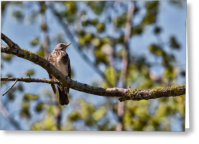 Greeting Card featuring the photograph Bird Sitting On Brach by Leif Sohlman