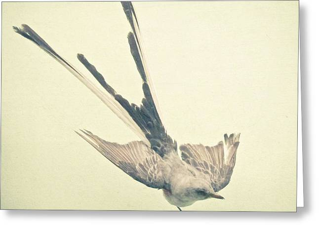 Bird Study No1 Greeting Card by Cassia Beck