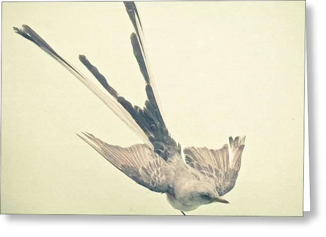 Bird Study No1 Greeting Card