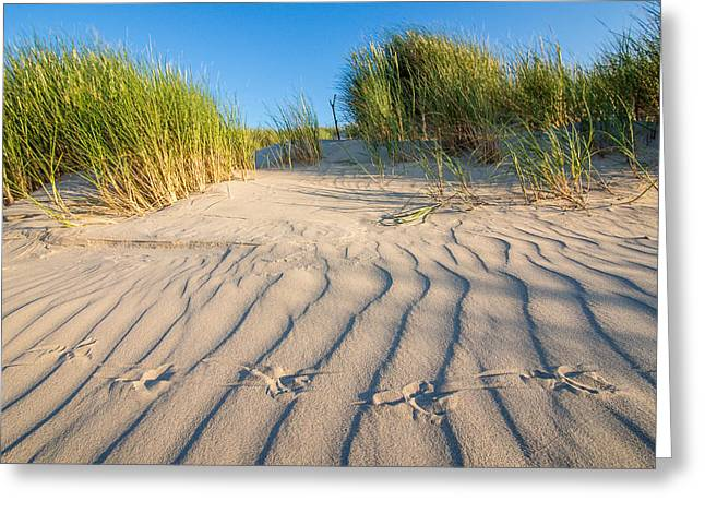Bird Traces In The Sand Dunes Greeting Card