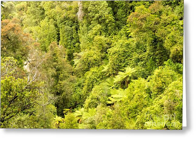 Bird View Of Lush Green Sub-tropical Nz Rainforest Greeting Card by Stephan Pietzko