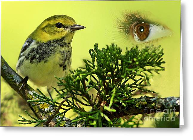Bird Watching Greeting Card by Inspired Nature Photography Fine Art Photography