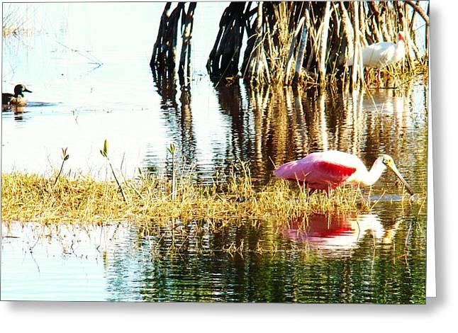 Bird Watching Greeting Card by Van Ness