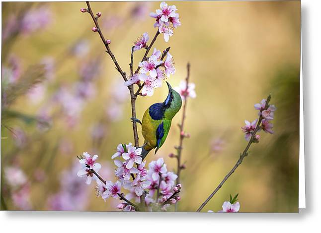 Bird Whispering To The Peach Flower Greeting Card