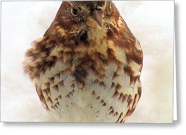 Greeting Card featuring the photograph Fox Sparrow In Snow by Janette Boyd
