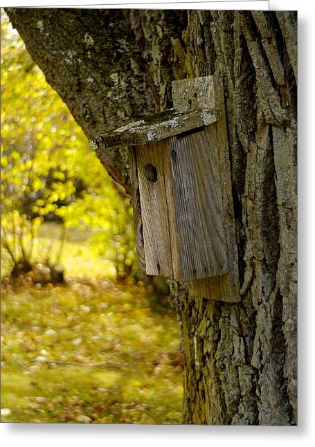 Birdhouse Greeting Card by Alex King