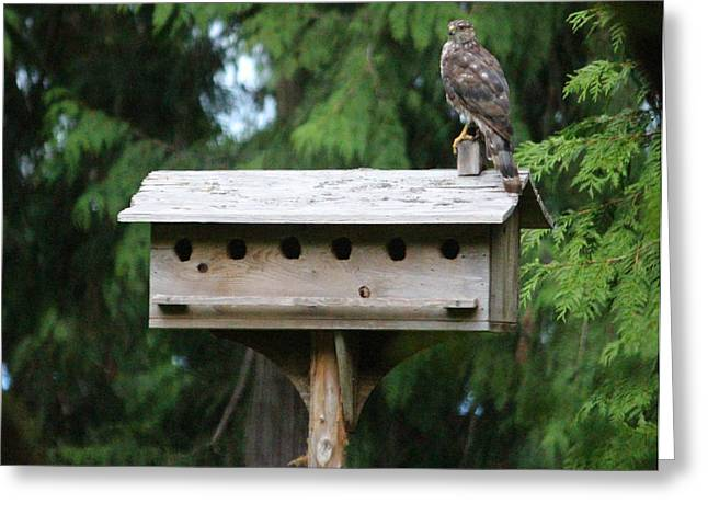 Birdhouse Takeover  Greeting Card by Kym Backland